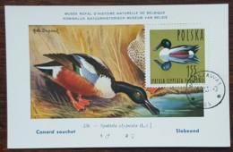Pologne - Carte Maximum / CM 1964 - YT N°1353 - Faune / Oiseaux  / Canard Souchet - Cartes Maximum