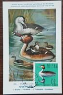 Pologne - Carte Maximum / CM 1964 - YT N°1355 - Faune / Oiseaux  / Grèbe Huppé - Cartes Maximum