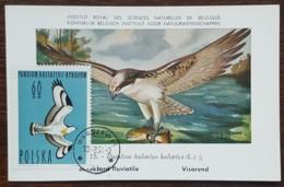 Pologne - Carte Maximum / CM 1964 - YT N°1350 - Faune / Oiseaux  / Balbuzard - Cartes Maximum