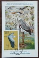 Pologne - Carte Maximum / CM 1964 - YT N°1351 - Faune / Oiseaux  / Héron Cendré - Cartes Maximum