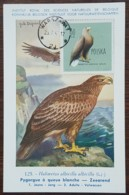 Pologne - Carte Maximum / CM 1963 - YT N°1075 - Faune / Oiseaux  / Pygargue - Cartes Maximum