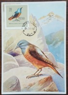 Pologne - Carte Maximum / CM 1963 - YT N°1078 - Faune / Oiseaux  / Merle - Cartes Maximum