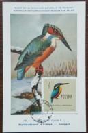 Pologne - Carte Maximum / CM 1963 - YT N°1079 - Faune / Oiseaux  / Martin Pêcheur - Cartes Maximum