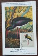 Pologne - Carte Maximum / CM 1963 - YT N°1073 - Faune / Oiseaux  / Cigogne Noire - Cartes Maximum