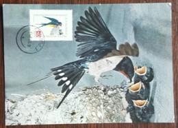 Roumanie - Carte Maximum / CM 1960 - YT Aérien N°94 - Faune / Oiseaux  / Hirondelle - Cartes-maximum (CM)