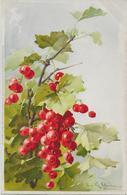 Fruit Groseilles-MO - Fleurs, Plantes & Arbres
