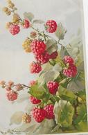 Fruit Framboises-MO - Fleurs, Plantes & Arbres
