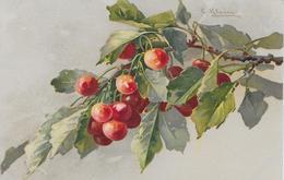 Fruit Cerises-MO - Fleurs, Plantes & Arbres