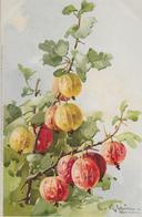 Fruit Physalis-MO - Fleurs, Plantes & Arbres