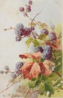 Fruit Mûres-MO - Fleurs, Plantes & Arbres