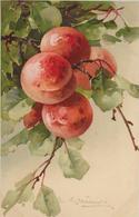 Fruit Abricots-MO - Fleurs, Plantes & Arbres