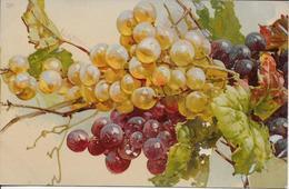 Fruit Raisins-MO - Fleurs, Plantes & Arbres