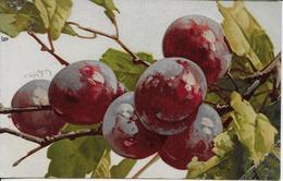 Fruit Prunes-MO - Fleurs, Plantes & Arbres