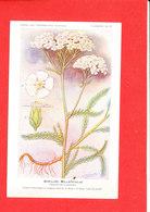 Plante Cpa Achillée Milleufeuille     Edit Fumouze Planche N 29 - Plantes Médicinales