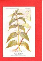 Plante Cpa Ortie Blanche     Edit Fumouze Planche N 17 - Plantes Médicinales