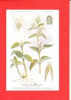 Plante Cpa Dompte Venin Officinal Planche N 16 - Plantes Médicinales