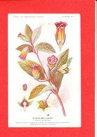 Plante Cpa Atropa Belladone Edit Fumouze Planche 9 - Plantes Médicinales