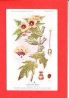Plante Cpa Jusquiame Noire Edit Fumouze Planche 11 - Plantes Médicinales