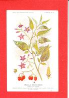 Plante Cpa Morelle Douce Amere Edit Fumouze Planche 12 - Plantes Médicinales