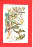 Plante Cpa Compagnon Blanc Edit Fumouze Planche 20 - Plantes Médicinales