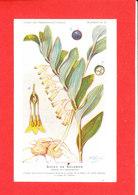 Plante Cpa Sceau De Salomon Edit Fumouze Planche 26 - Plantes Médicinales