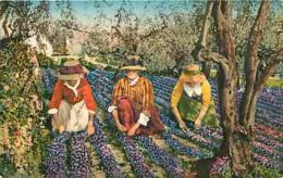 06 - Grasse - Cueillette Des Violettes - Femmes - Folklore - Colorisée - Animée - Correspondance - Voyagée En 1930 - Fle - Grasse
