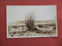 RPPC   Ocotillo On The Desert  Near Yuma Az  -ref 3103 - Cactus