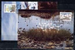 X0479-1)Groenland Maxi-Card  197/8 Blumen - Groenlandia