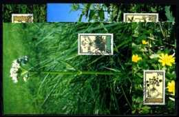 X2169)Maximumkarte Liechtenstein 1116/1119 Blumen - Maximumkarten (MC)