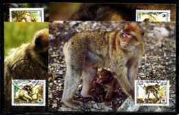 X2458)Algerien Maxi-Karte 972/5 WWF 69 Berberaffe - W.W.F.