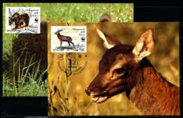 X2618)Italien Maxi-Karte Ex 2193/6 WWF 120 Tiere 2 Karten - Maximumkarten (MC)