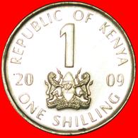 # COCK (2005-2010): KENYA ★ 1 SHILLING 2009 MINT LUSTER!  LOW START ★ NO RESERVE! - Kenya
