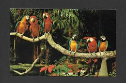 ANIMAUX - ANIMALS - OISEAUX - BIRDS - PARROT JUNGLE - PARROTS - PERROQUETS - PHOTO H.W. HANNAU - Oiseaux