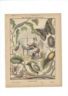 SÉRICULTURE Les Animaux En Agriculture Couverture 220 X 175 TB 3 Scans - Book Covers