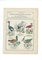Les Echassiers Histoire Naturelle Couverture 220 X 175 TB 3 Scans - Protège-cahiers