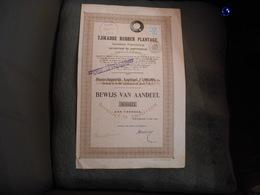 "Action""Tjikadoe Rubber Plantage"" Amsterdam 1910 S'Gravenhage La Haye Agriculture Netherlands. - Banque & Assurance"