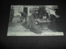 Kust  Pêche De La Crevette  -  Triage Des Crevettes   D.V.D. 10971 - Belgique