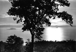 Cartolina Montefiascone Tramonto Sul Lago 1963 - Viterbo