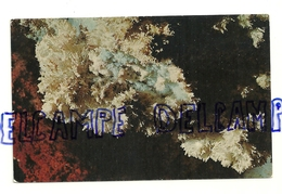 Aragonite. Mercer Caverns, Murphys, California. Color By Mike Roberts. Published For Mal-Pra Enterprises. - Cartes Postales