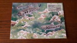 Taiwan / Maximum Card / Fish - 1945-... República De China