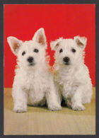 89678/ CHIEN, CHIENS, Westies - Cani