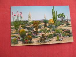 Group Of Desert   Cactusses        Ref 3105 - Cactus