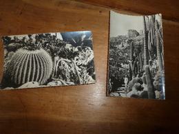 CPM : Lot De 2 Cartes ----> Jardin Exotique De MONACO - Cactus