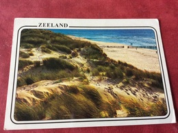 Nederland. Pays-Bas. Holland. Zeeland. Strand En Duinen. Helmgras - Bloemen, Planten & Bomen