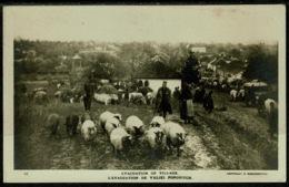 Ref 1245 - Real Photo Postcard - Evacuation Of Popovitch Village - Bulgaria ? - Bulgaria