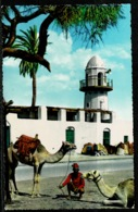 Ref 1246 - Photo Postcard - Camels Outside Sheikh Othman Mosque - Aden Yemen - Yemen