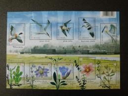 België Belgium 2016 - Het Zwin Nature Reserve - Buzin Birds Flowers Nature Conservation - Belgique
