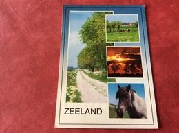 Nederland. Pays-Bas. Holland. Paard Koe - Paarden