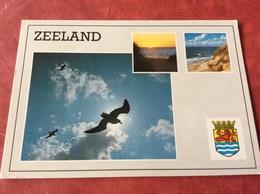 Nederland. Pays-Bas. Holland. Meeuwen - Vogels
