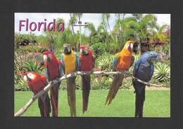 ANIMAUX - ANIMALS - OISEAUX - BIRDS - PARROT JUNGLE FLORIDA - PARROTS - PERROQUETS - PHOTO BY ALAN SCHEIN - Oiseaux